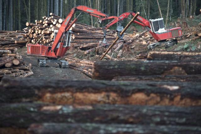 Selon le pdg du Conseil de l'industrie forestière... (La Presse canadienne, Jonathan Hayward)