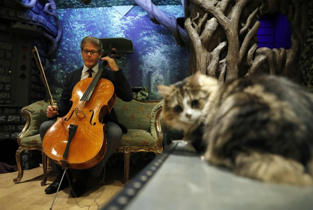 Le violoncelliste David Teie a présenté ses compositions... (Photo Adrian Dennis, AFP)