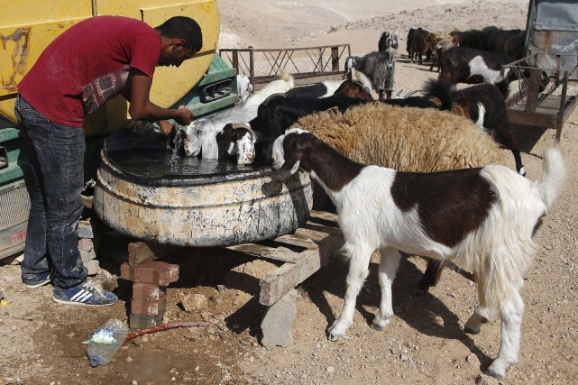 Un homme et ses chèvres boivent à une... (AFP, Ahmad Gharabli)