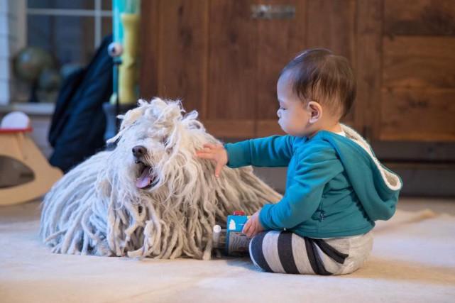 Le chien Beast et la fille de Mark... (Photo tirée du compte Facebook de Mark Zuckerberg)
