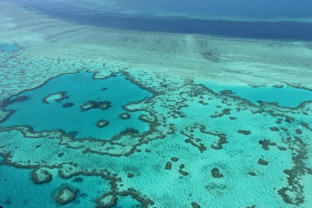 La Grande barrière de corail a évité de... (photo  SARAH LAI, archives AFP)