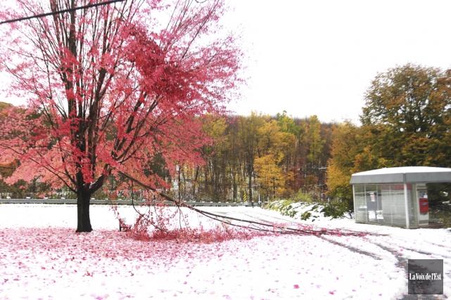 Des arbres tombés ont été signalés un peu... (Catherine Trudeau, La Voix de l'Est)