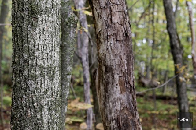 L'économie du Pontiac demeure traditionnellement liée à l'industrie forestière,... (Patrick Woodbury, LeDroit)