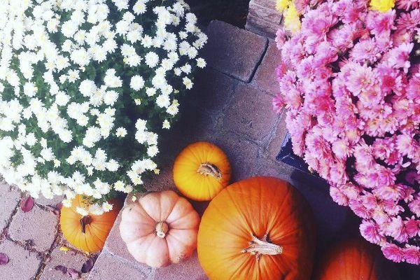 Vu sur Instagram:les chrysanthèmes d'automne.... (Photo tirée du compte Instagram de Marie-Eve Laforte)