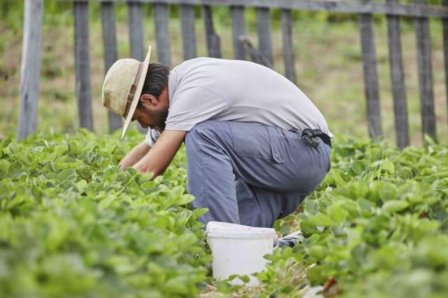 La main-d'oeuvre, majoritairement payée au salaire minimum, représente... (123RF/xalanx)