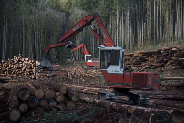 L'industrie forestière figure parmi les seuls secteurs économiques... (La Presse canadienne)