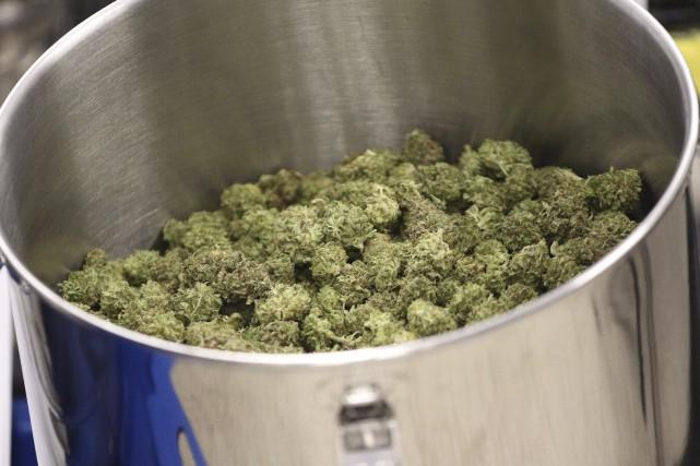 Cannabis médicinal produit à Moncton, au Nouveau-Brunswisk... (La Presse Canadienne, Ron Ward)