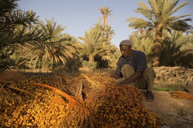 Les palmiers dattiers sont un mur naturel contre... (AFP)