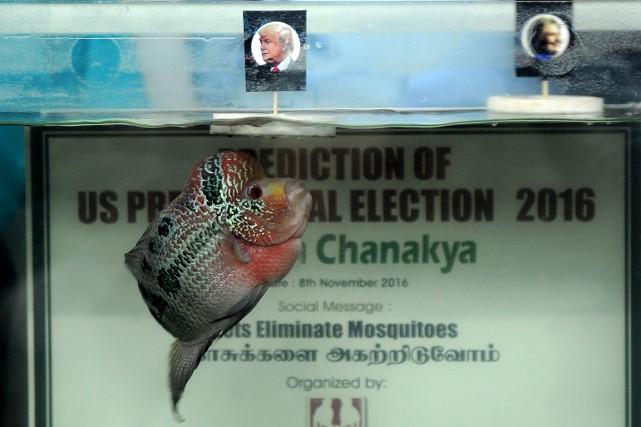 Le poisson coloré a opté pour Donald Trump,... (ARUN SANKAR, AFP)