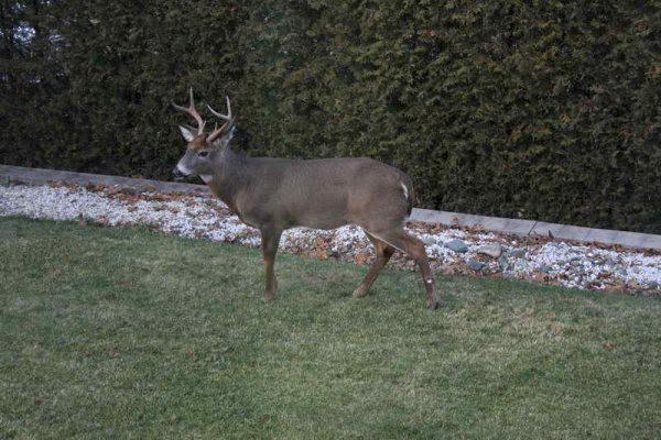 Le calendrier hâtif de la saison de chasse... (Photo fournie par Guy Robert)