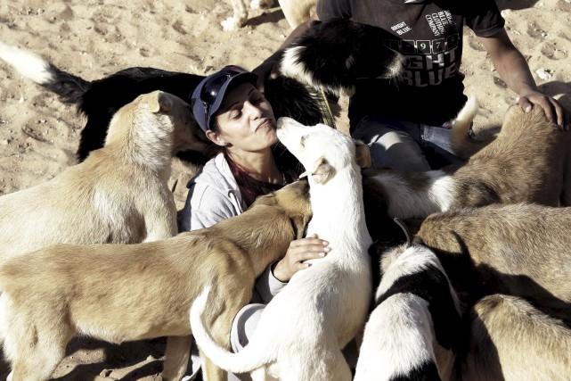 Quelque 350 animaux domestiques blessés ou abandonnés par... (AFP)
