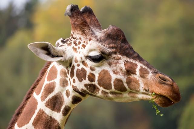 CHRONIQUE / Depuis les vingt dernières années, les zoos ont beaucoup changé.... (123RF)
