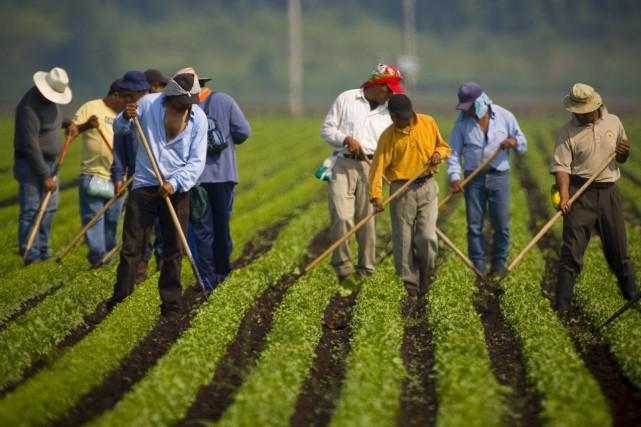 En agriculture, augmenter le salaire minimum à 15... (La Voix de l'Est)