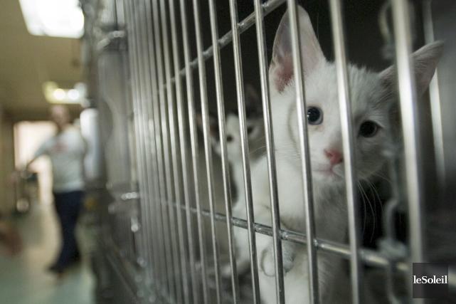 Chaque année, quelque 4000 chats et chiens en... (Photothèque Le Soleil)