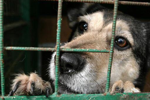 Un chien abandonné dans un refuge.... (Archives AFP)