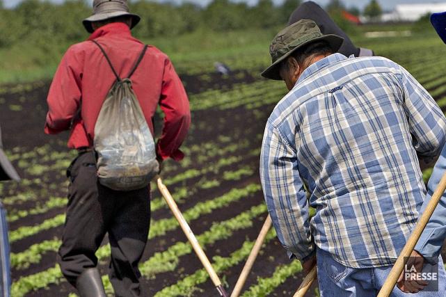 Les trois derniers travailleurs guatémaltèques toujours emprisonnés pour s'être... (Archives La Presse)