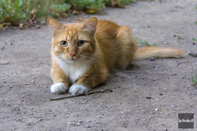 En vertu d'une nouvelle entente, tout chat errant... (Photothèque Le Soleil)