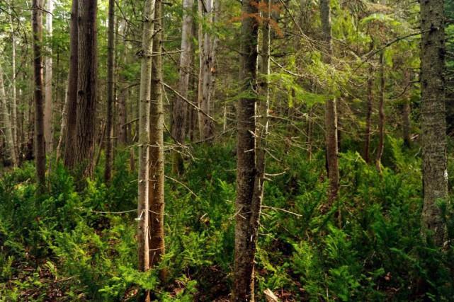 La publication dedeux nouvelles normes par l'organisme Forest... (Photo Bernard Brault, Archives La Presse)