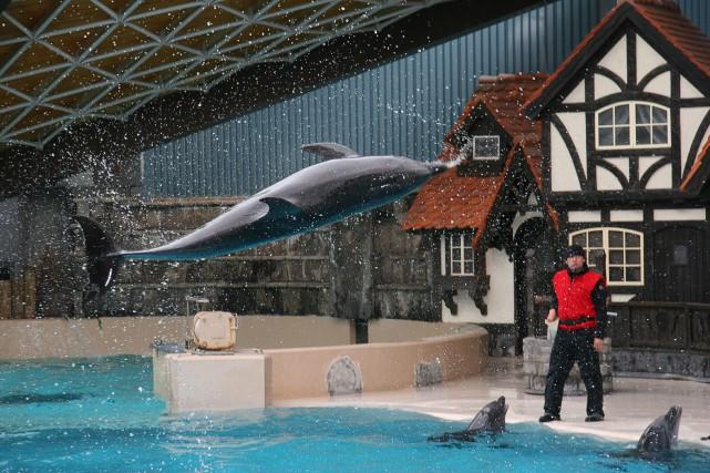 L'agence ontarienne pour la protection des animaux a déposé cinq accusations de... (PHOTO ARCHIVES)