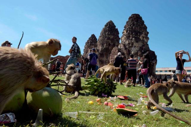 Les singes de Lopburi sont connus pour n'avoir... (AFP, TANG CHHIN Sothy)