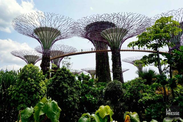 Les gigantesques arbres futuristes de Gardens by the... (La Presse, Audrey Ruel-Manseau)