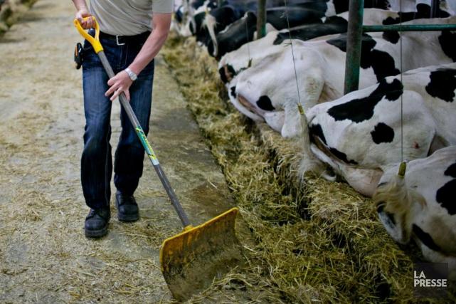 Un agriculteur québécois sur deux souffre d'un niveau... (PHOTO DAVID BOILY, ARCHIVES LA PRESSE)