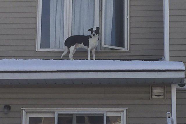 Des pompiers d'Ottawa ont prêté main-forte à un chien qui s'est introduit dans...