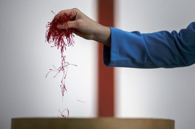 Sur les arides plateaux de la Manche espagnole, les producteurs de safran... (PHOTO AFP)