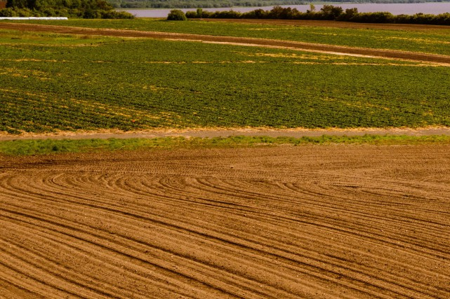 La Commission de protection du territoire agricole (CPTAQ)... (La Presse)
