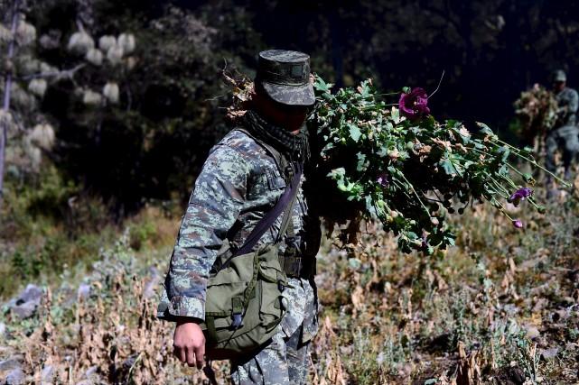 Les militaires livrent une bataille difficile pour éradiquer... (AFP, Alfredo Estrella)