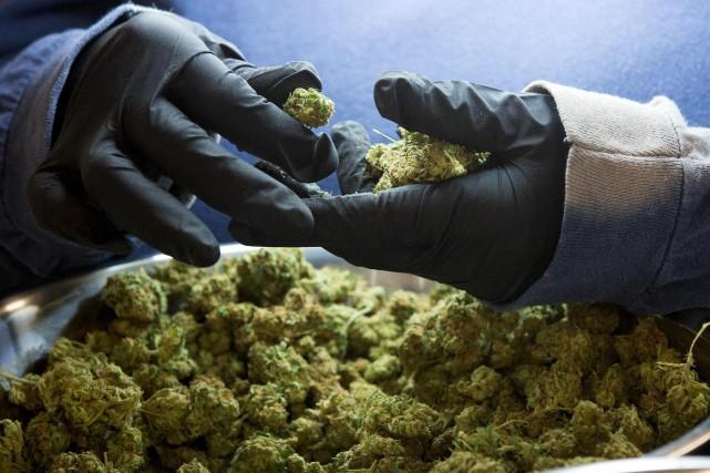 Les recettes de la vente de cannabis doivent... (AFP, Lars Hagberg)