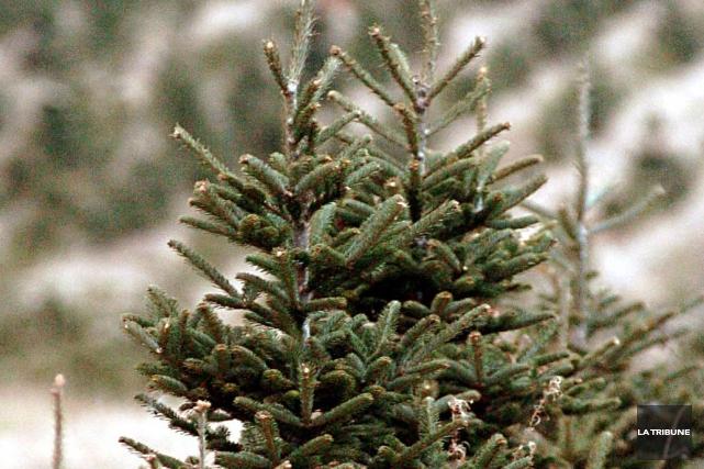 La Ville de Sherbrooke procédera à la collecte des sapins de Noël à partir du 9... (Archives La Tribune)