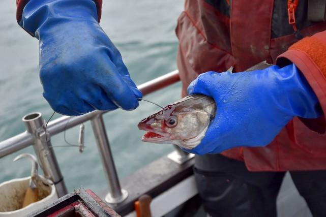 Une fois le poisson remonté à bord, un... (PHOTO AFP)