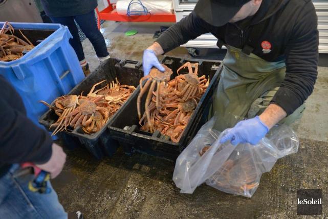 En 2016 au Québec, les pêcheurs commerciaux ont... (Photothèque Le Soleil, Yan Doublet)