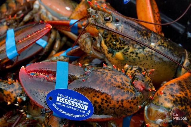La chair de homard canadien a atteint un... (Photo Robert Skinner, archives La Presse)