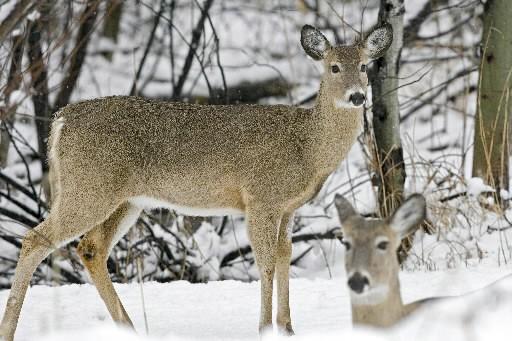 Au Québec, un chasseur sur trois a récolté... (Archives, La Presse)