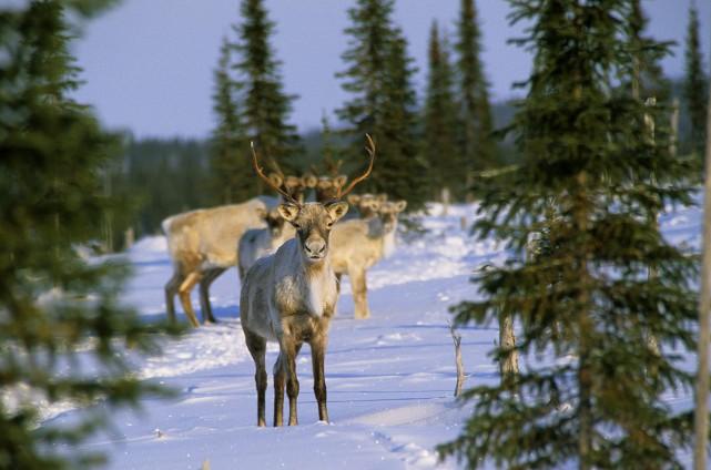 Le ministère de la Forêt, de la Faune et des Parcs ne peut garantir que les... (Archives)