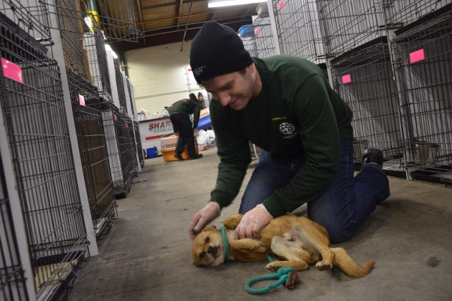 Selon la Humane Society International Canada, 110 chiens... (PHOTO Michael Bernard, LA PRESSE CANADIENNE)