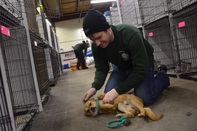 Selon la Humane Society International Canada, 110 chiens... (PHOTO Michael Bernard, LA PRESSE CANADIENNE)