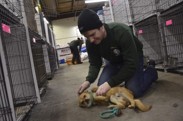 Humane Society International Canada a pris en charge... (HSIC, Michael Bernard, via La Presse Canadienne)