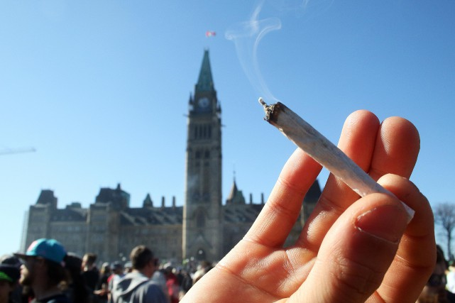 Ottawa compte légaliser le cannabis au courant de... (Etienne Ranger, Le Droit)