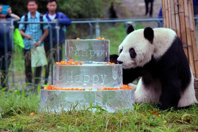 Pan Pan est né en 1985 à l'état... (PHOTO STR / China OUT / AFP)