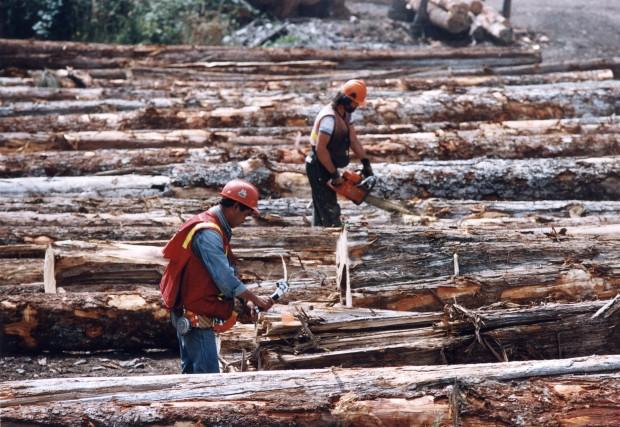Le Conseil de l'industrie forestière du Québec travaille... (Archives PC)