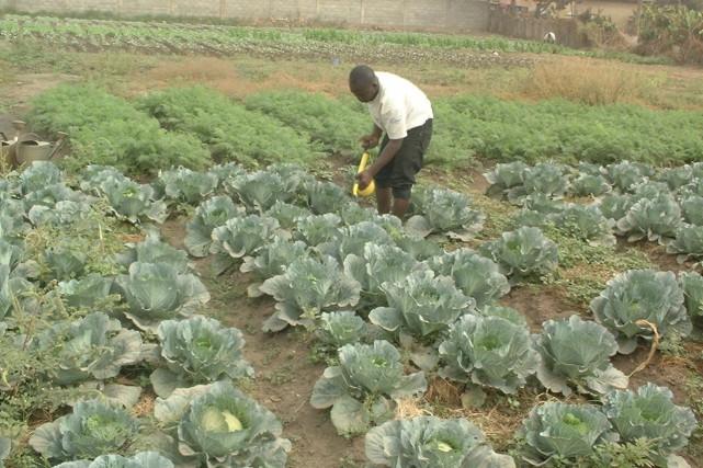 À l'instar de cette plantation maraîchère au Bénin,... (Courtoisie)