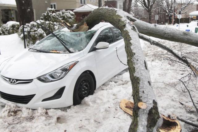 Sous le poids de la glace, une branche... (Etienne Ranger, Le Droit)
