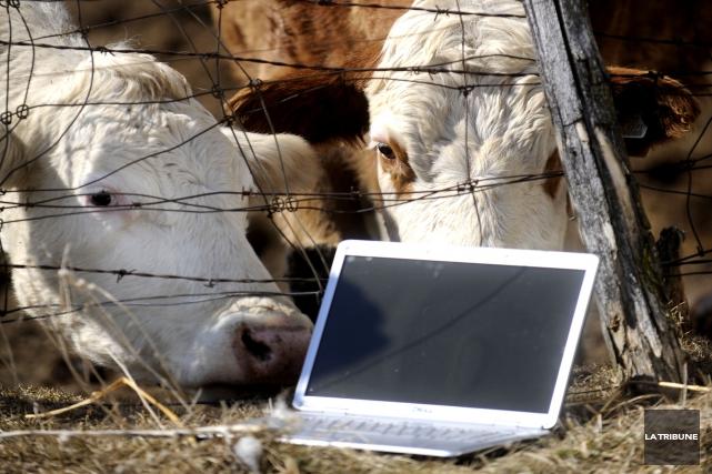 S'adressant aux communautés qui n'ont pas accès à internet haute vitesse ou qui... (Archives La Tribune, René Marquis)