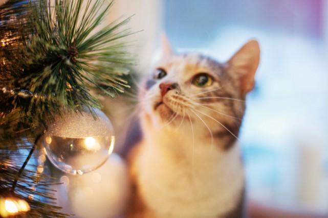Le chaton ou le chiot, qui avait toute... (123RF)