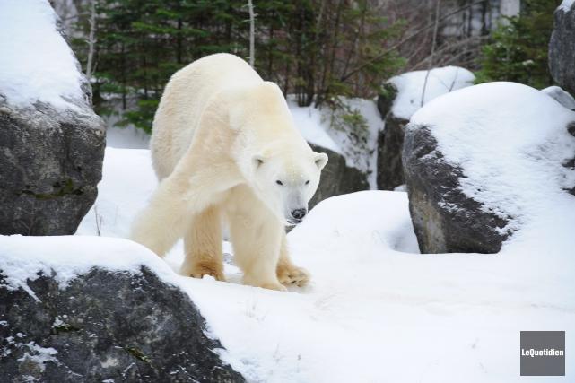 Le Zoo sauvage de Saint-Félicien a connu un... (Archives Le Quotidien, Gimmy Desbiens)