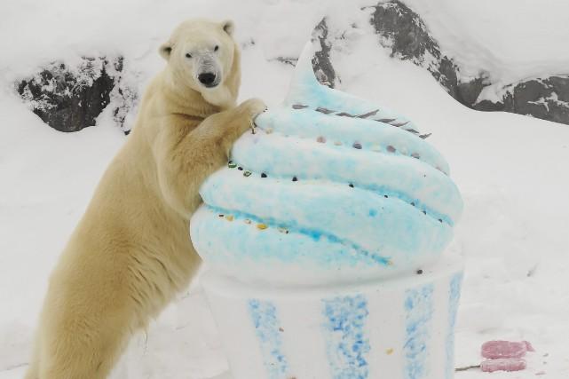 L'ours Yellé s'est régalé samedi après-midi. Un immense... (Le Progrès-Dimanche, Gimmy Desbiens)