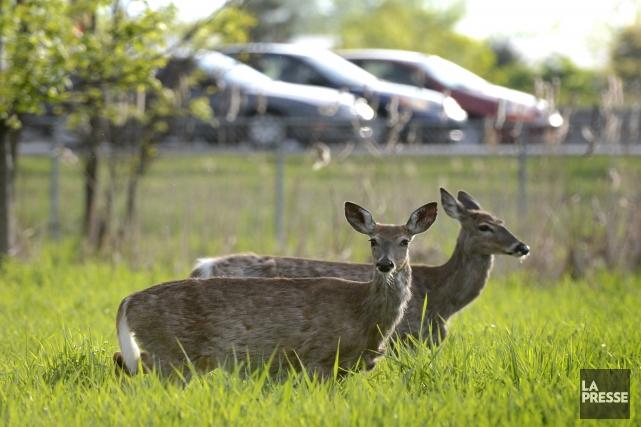 Interdire la chasse apporterait d'autres problèmes auxquels vous... (Bernard Brault, archives La Presse)